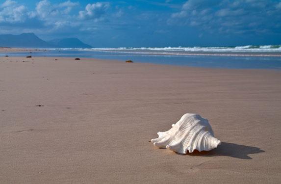 Романтическое путешествие, Сокотра, красоты дикого пляжа
