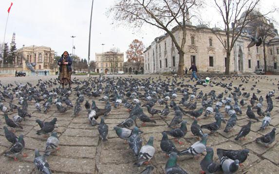 Православие в Турции, голуби у Храма Святой Софии