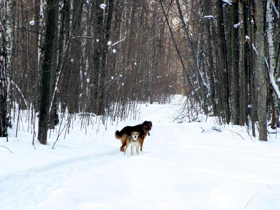 Друзья человека и зимний лес