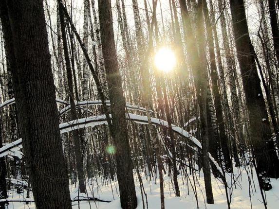 Вечер, зимний лес