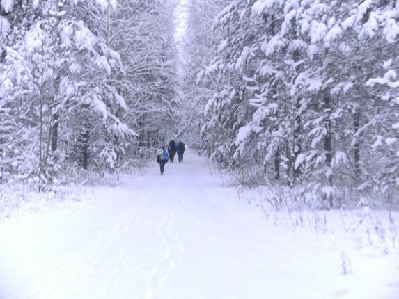 Романтика зимнего леса
