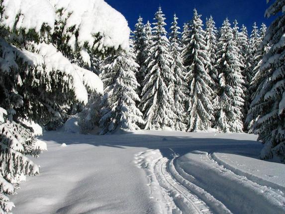 Сочинение. Зима! Ребенок торжествует! Лыжня в лесу.